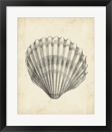 Framed Antique Shell Study III Print
