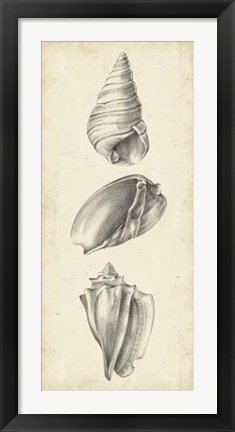 Framed Antique Shell Study Panel II Print