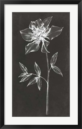 Framed Single Stem IV Print