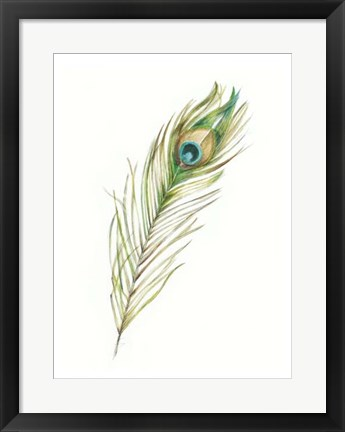 Framed Watercolor Peacock Feather II Print