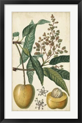 Framed Exotic Fruits III Print