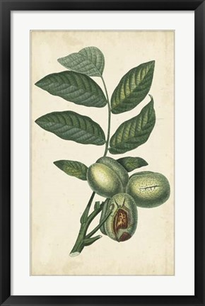 Framed Exotic Fruits IV Print