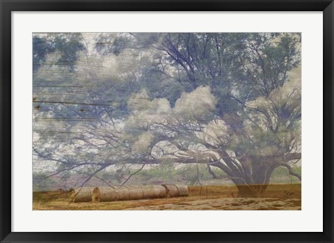 Framed Texas Tree Collage Print