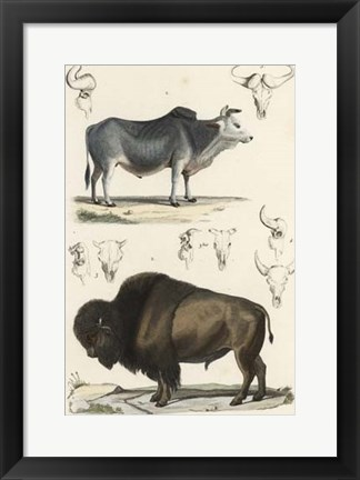 Framed Antique Cow & Bison Study Print