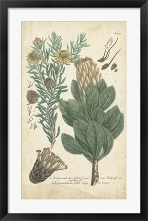 Framed Weinmann Conifers III Print