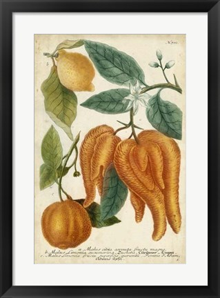 Framed Exotic Citrus I Print