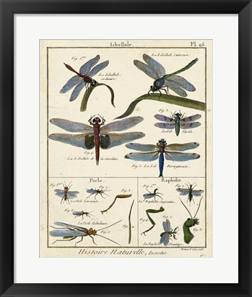 Framed Histoire Naturelle Insects I Print