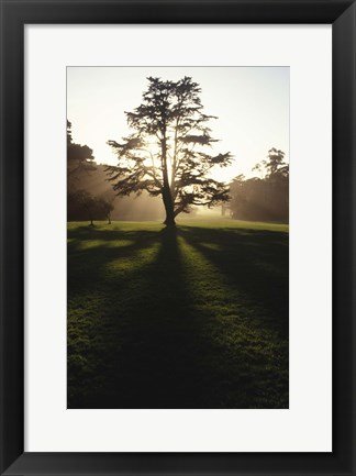 Framed Tree and Light Print