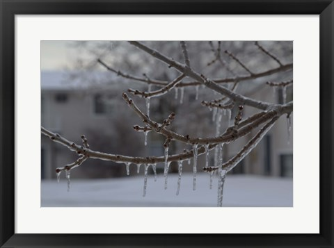 Framed Frozen Trees Print