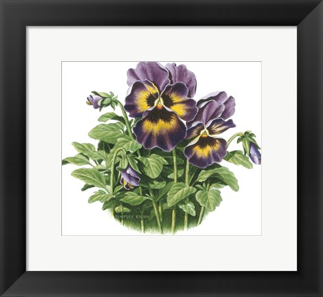 Framed Lavender Faces Print