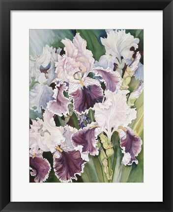 Framed Ruffled Burgundy Iris' Print