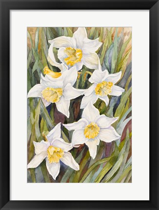 Framed Daffodil Heads Print