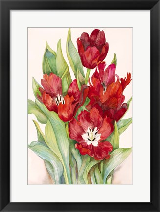 Framed Tulips Opening Up Print