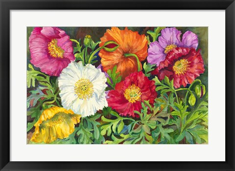 Framed Iceland Poppies Print