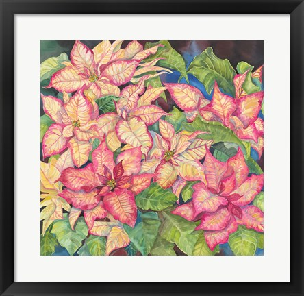Framed Pink Variegated Poinsettia Print