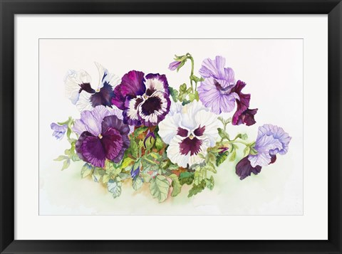 Framed White and Purple Pansies II Print
