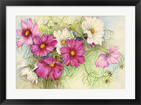 Framed Pink and White Cosmos Print