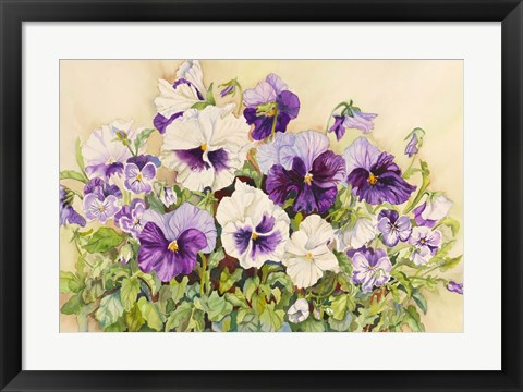 Framed White and Purple Pansies Print