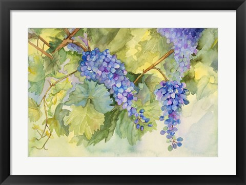 Framed Grape Vineyard Print