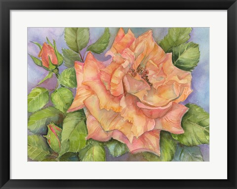 Framed Peach Blush Rose Print
