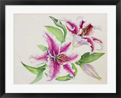 Framed Study Of Lilies Print