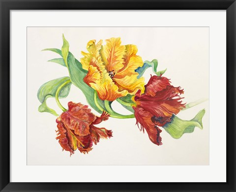 Framed Twining Tulips Print
