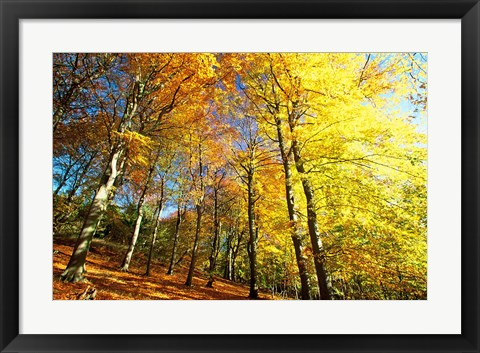 Framed Autumn Leaves of Trees Print