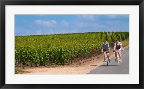 Framed Cyclists in Vineyards of Cote des Blancs Print