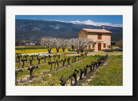 Framed Stone House and Vineyard, Mt Ventoux Print