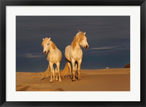 Framed Camargue Horse on Beach at Sunrise Print