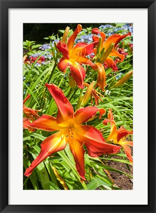 Framed Nova Scotia, Annapolis Royal Gardens Print