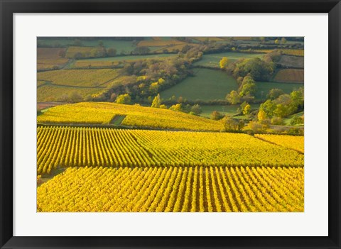 Framed Autumn Morning in Pouilly-Fuiss' Vineyards Print