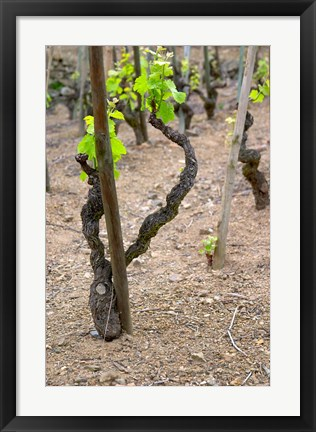 Framed Vineyards in the Cote Rotie District Print