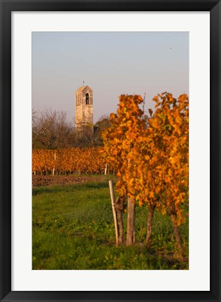 Framed Autumn Colors in the Vineyard Print