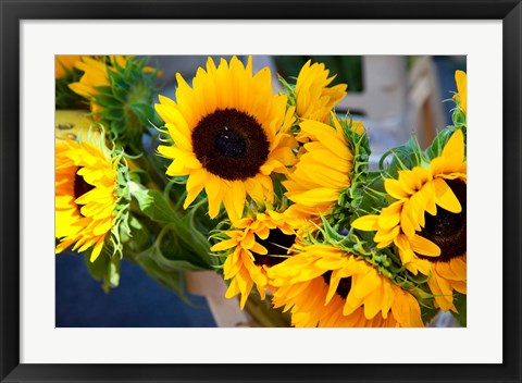 Framed Sunflower Market, France Print