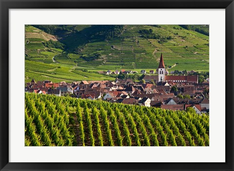 Framed Ammerschwihr Vineyards, Alsace Print