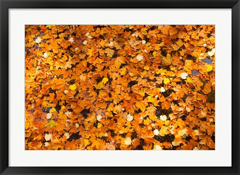 Framed Autumn Leaves, Jardin du Luxembourg Print
