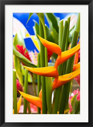 Framed Heliconia Flower, Seafront Market Print