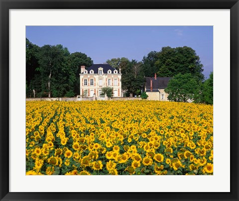 Framed Sunflowers and Chateau, Loire Valley, France Print