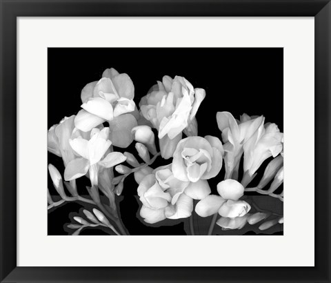 Framed Freesia III Print