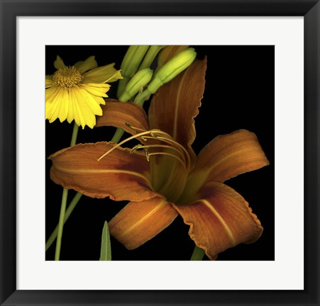 Framed Day Lily and Coreopsis Print
