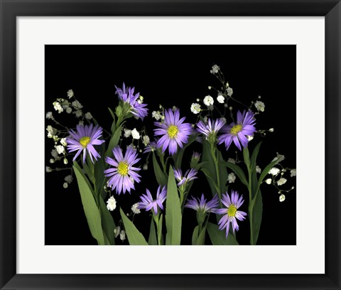 Framed Asters & Baby's Breath 2A Print