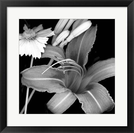 Framed Day Lily & Coreopsis Print