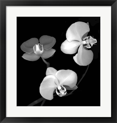 Framed Three Orchids Print