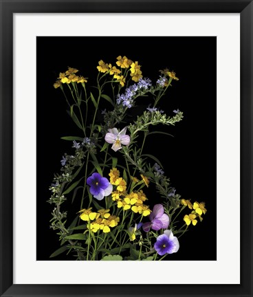 Framed Pansy, Rosemary & French Tarragon Print