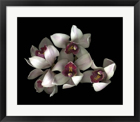 Framed Pale Pink& Fushia Orchid 2 Print