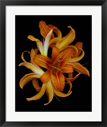 Framed Day Lilies Print
