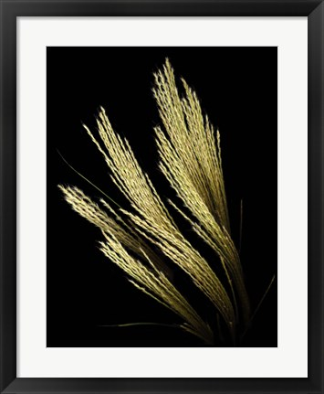 Framed Decorative Grass Print