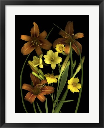 Framed Lilies & Coreopsis Print