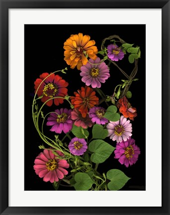 Framed Zinnia & Morning Glory Vines Print